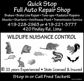Full Auto Repair Shop |We Catch'em and Move'em